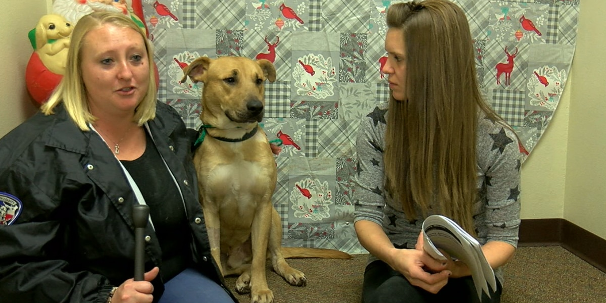 New program allows dogs to donate blood