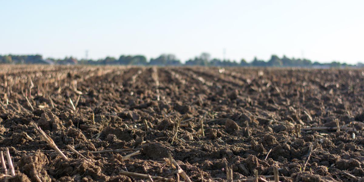 East Texas Ag News: Wait for dry soil before tilling your garden