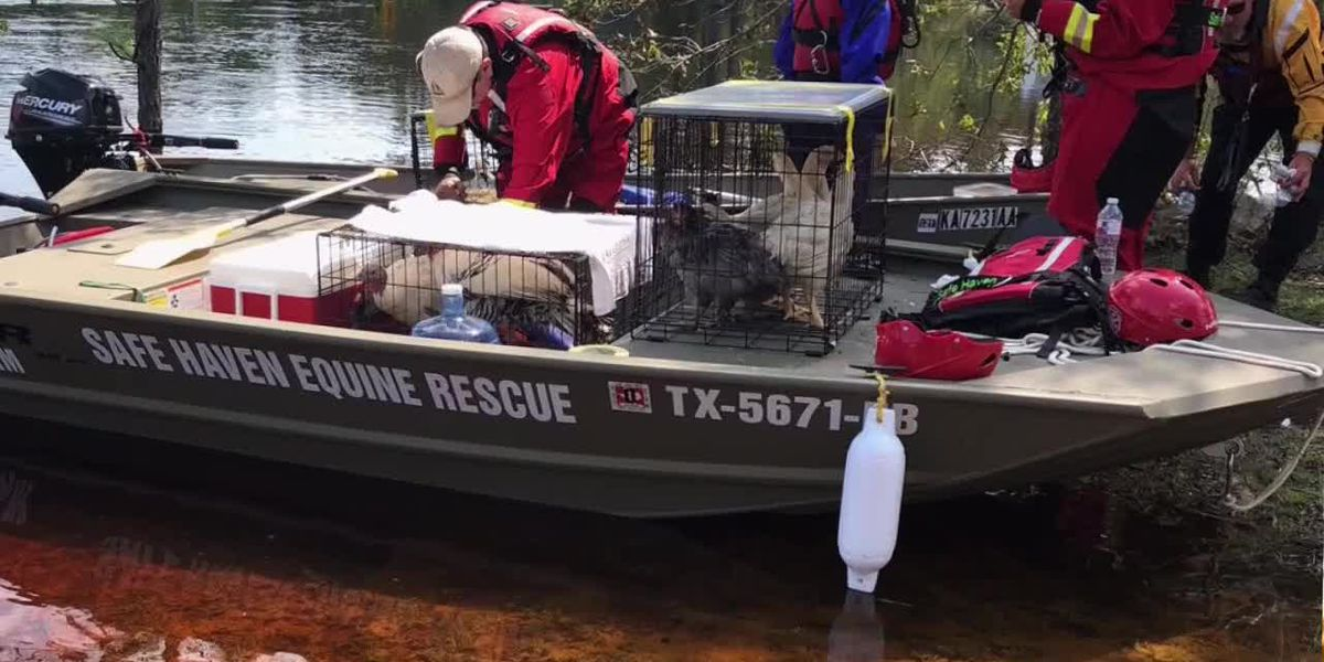 East Texans rescue animals in hurricane aftermath in Carolinas