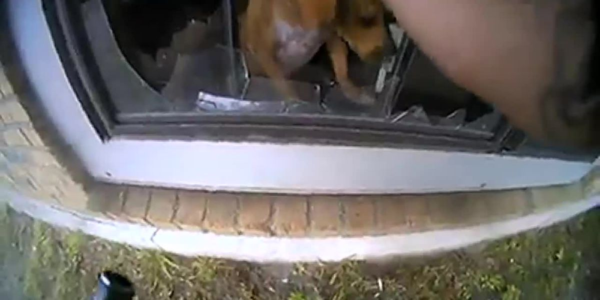 VIDEO: East Texas officer rescues dog trapped in burning home