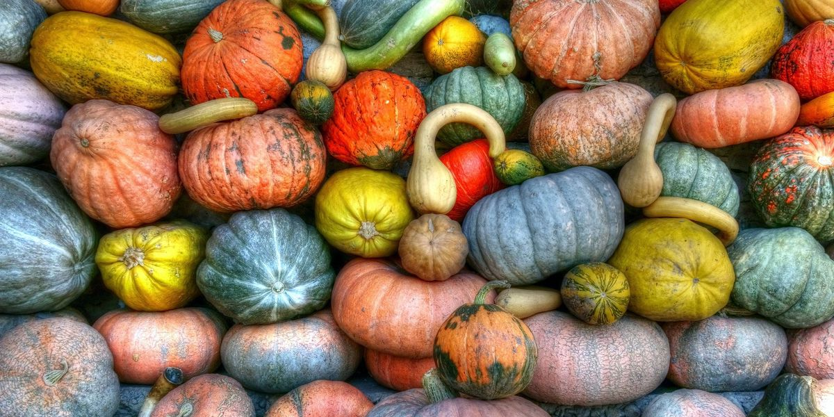 Grow winter squash in summer to stores for colder months