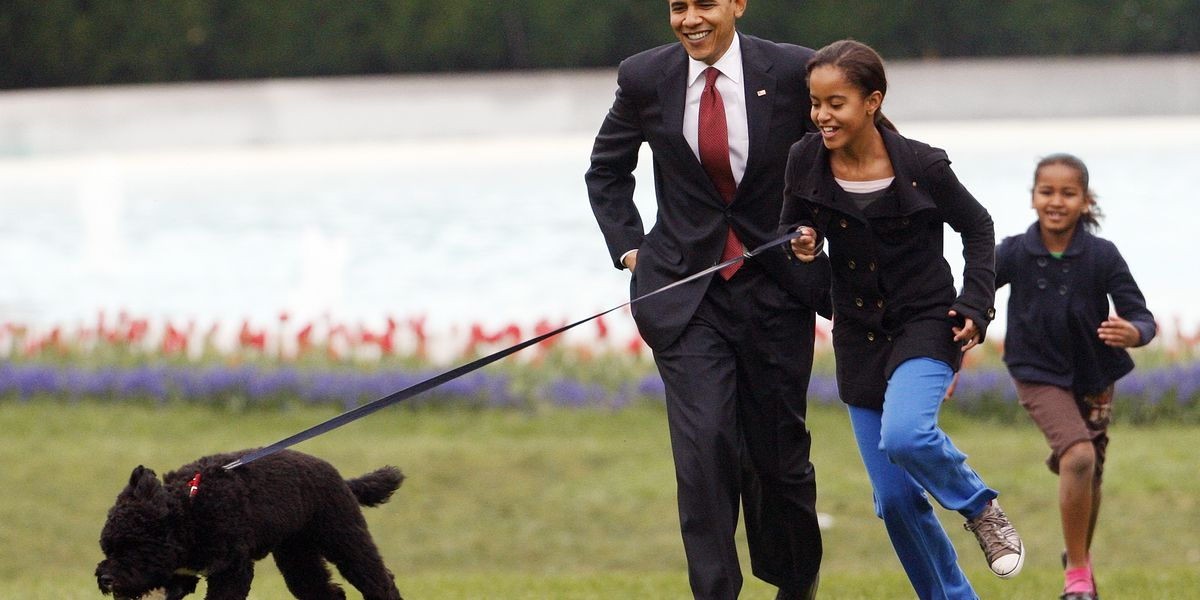 Obama dog Bo, once a White House celebrity, dies from cancer