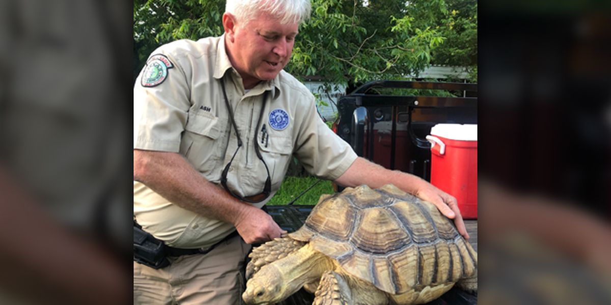 FOUND TORTOISE: Game Warden searching for African tortoise's owner