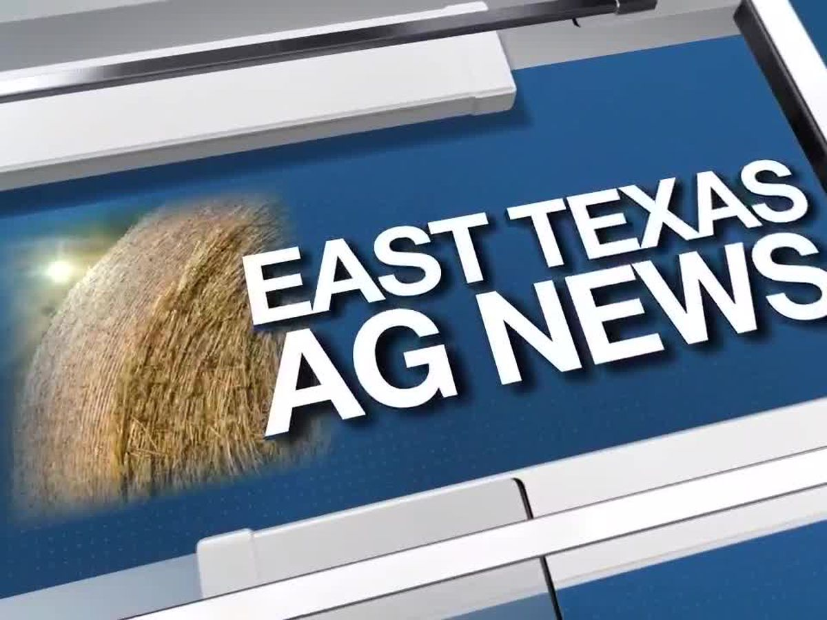 East Texas Ag News: Tips on summertime watering