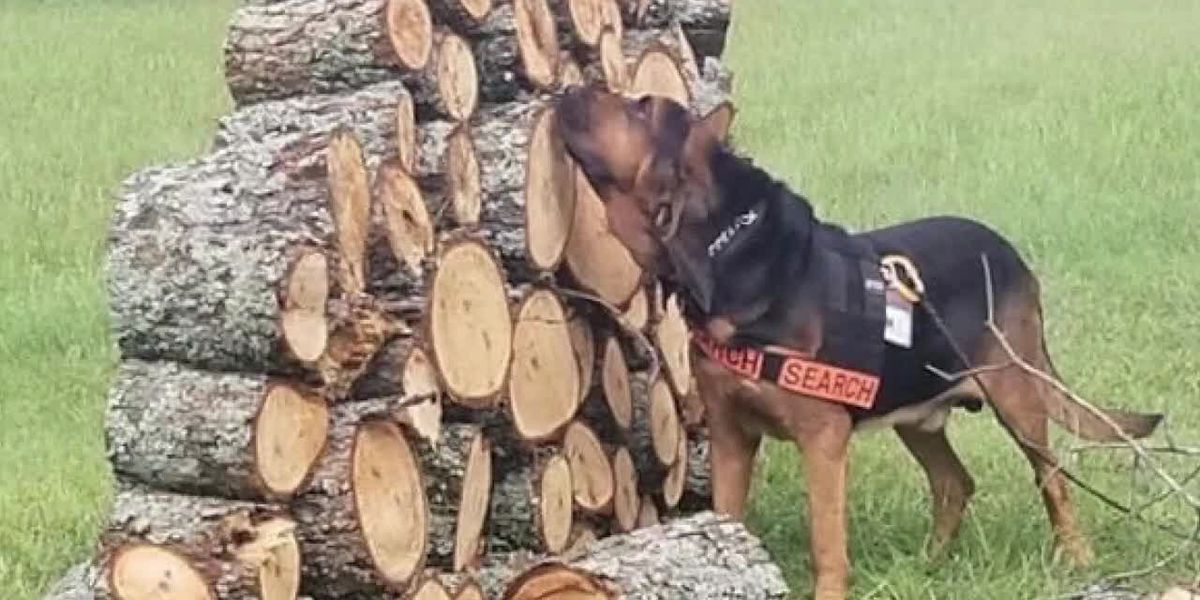 Small East Texas town has elite dog rescue unit