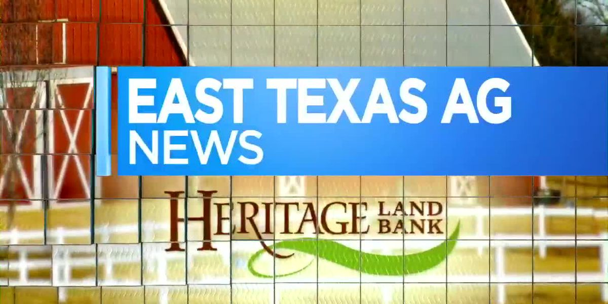 East Texas Ag News: Tips on ridding landscapes of winter weeds