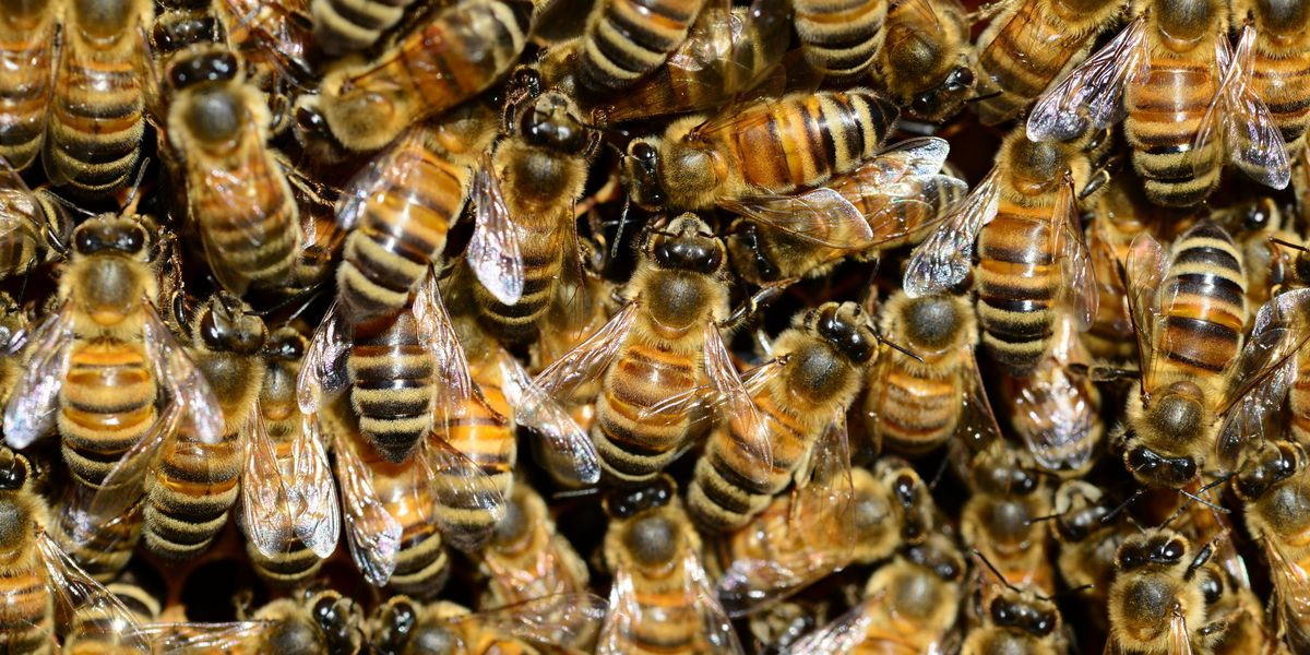 Semi-trailer hauling load of bees overturns on Texas highway