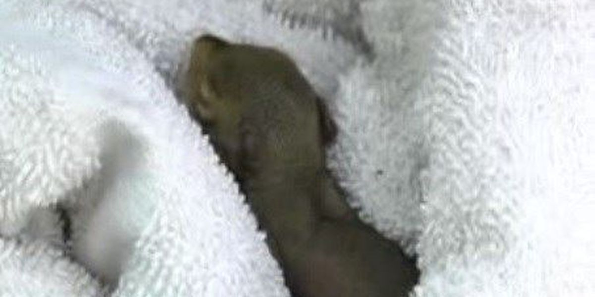 Firefighters make unusual rescue, save squirrel