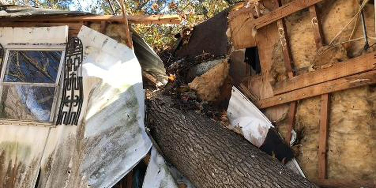 Monday's storm front blows tree into mobile home