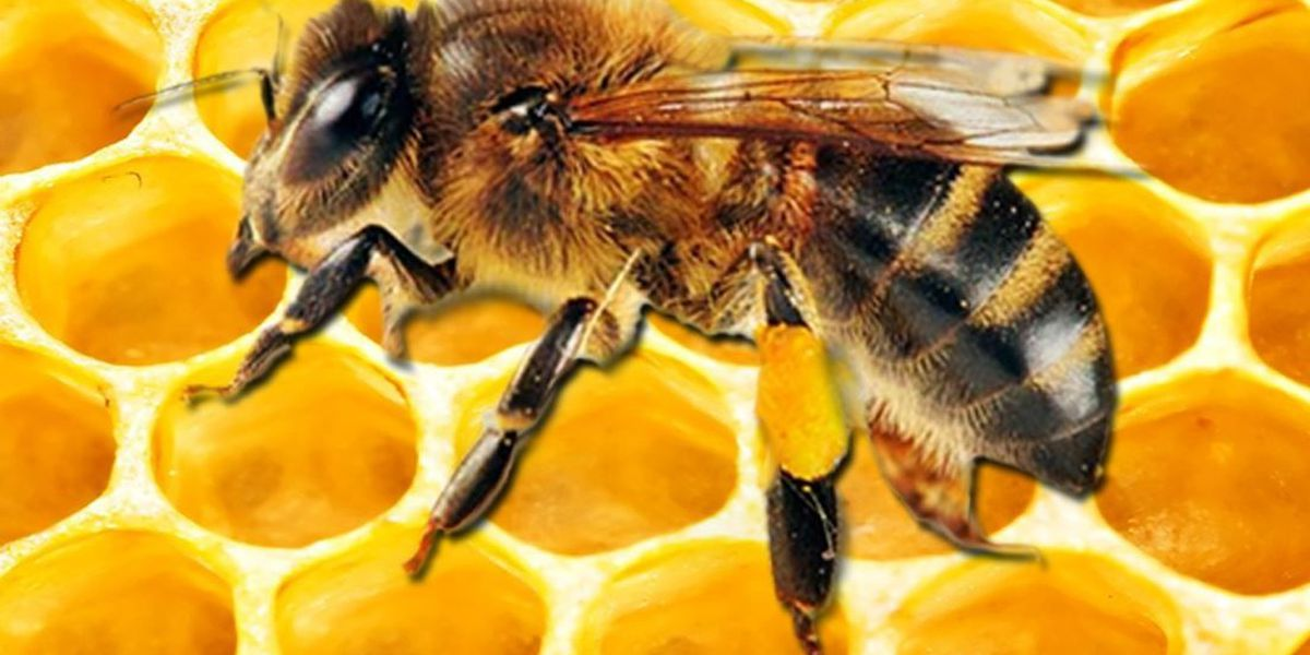 East Texas Ag News: The importance of bees in agriculture