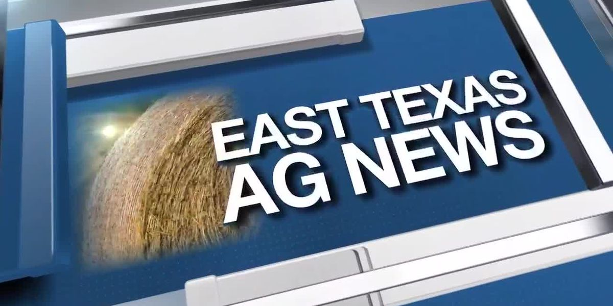East Texas Ag News: This week's hay trades steady in all regions of Texas