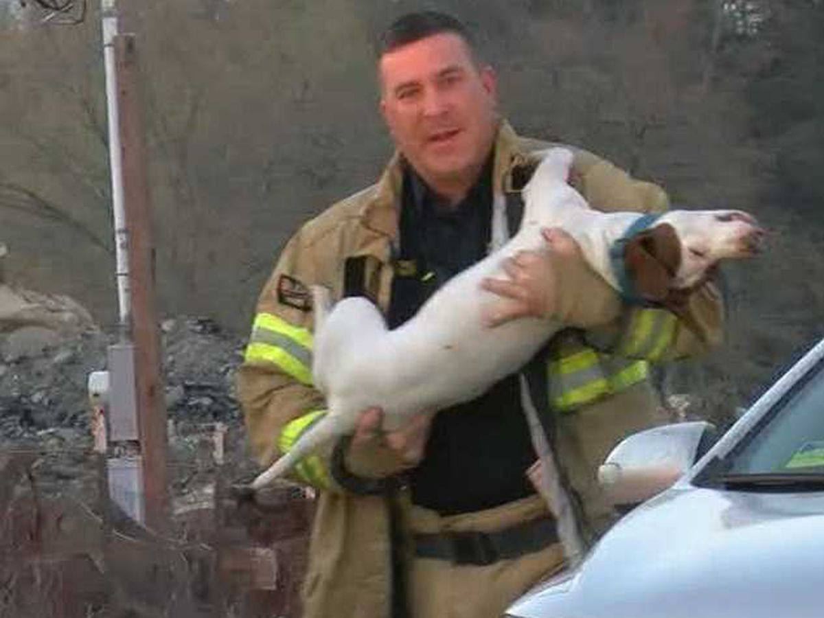Smith County firefighters rescue family's dogs from burning trailer
