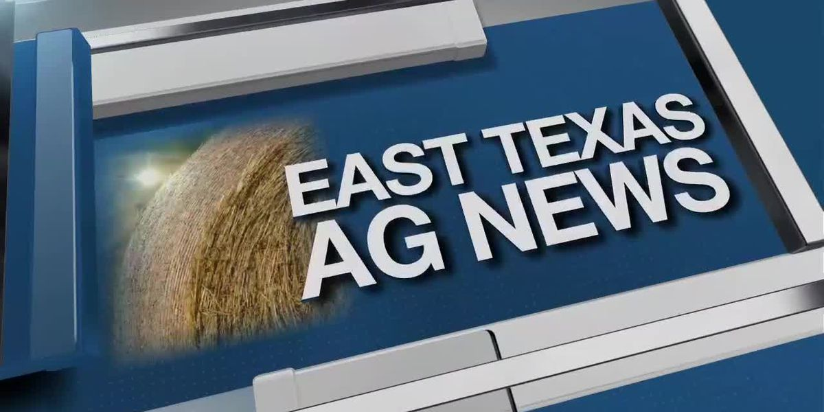 East Texas Ag News: Preparing for freezing weather