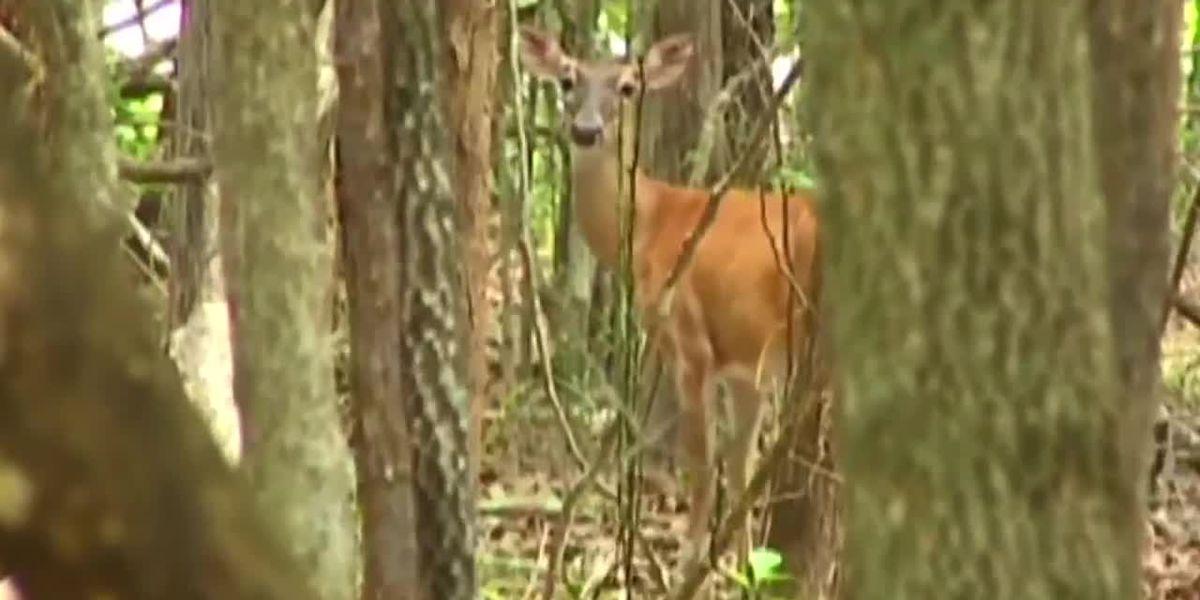 Hunters anticipate new deer hunting rules