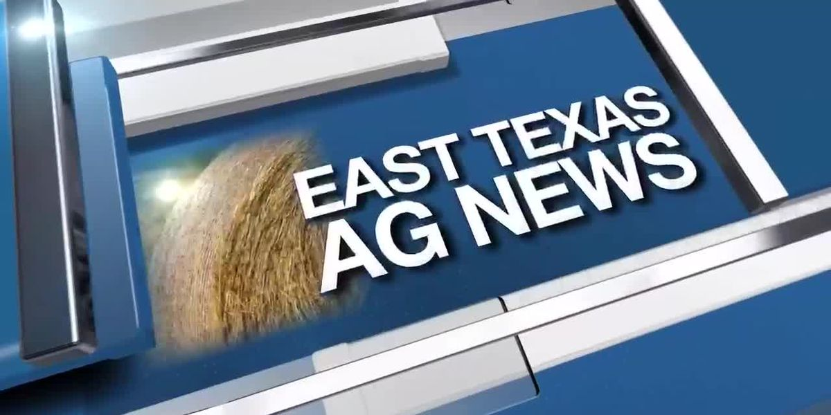 East Texas Ag News: Texas hay prices remain steady this week
