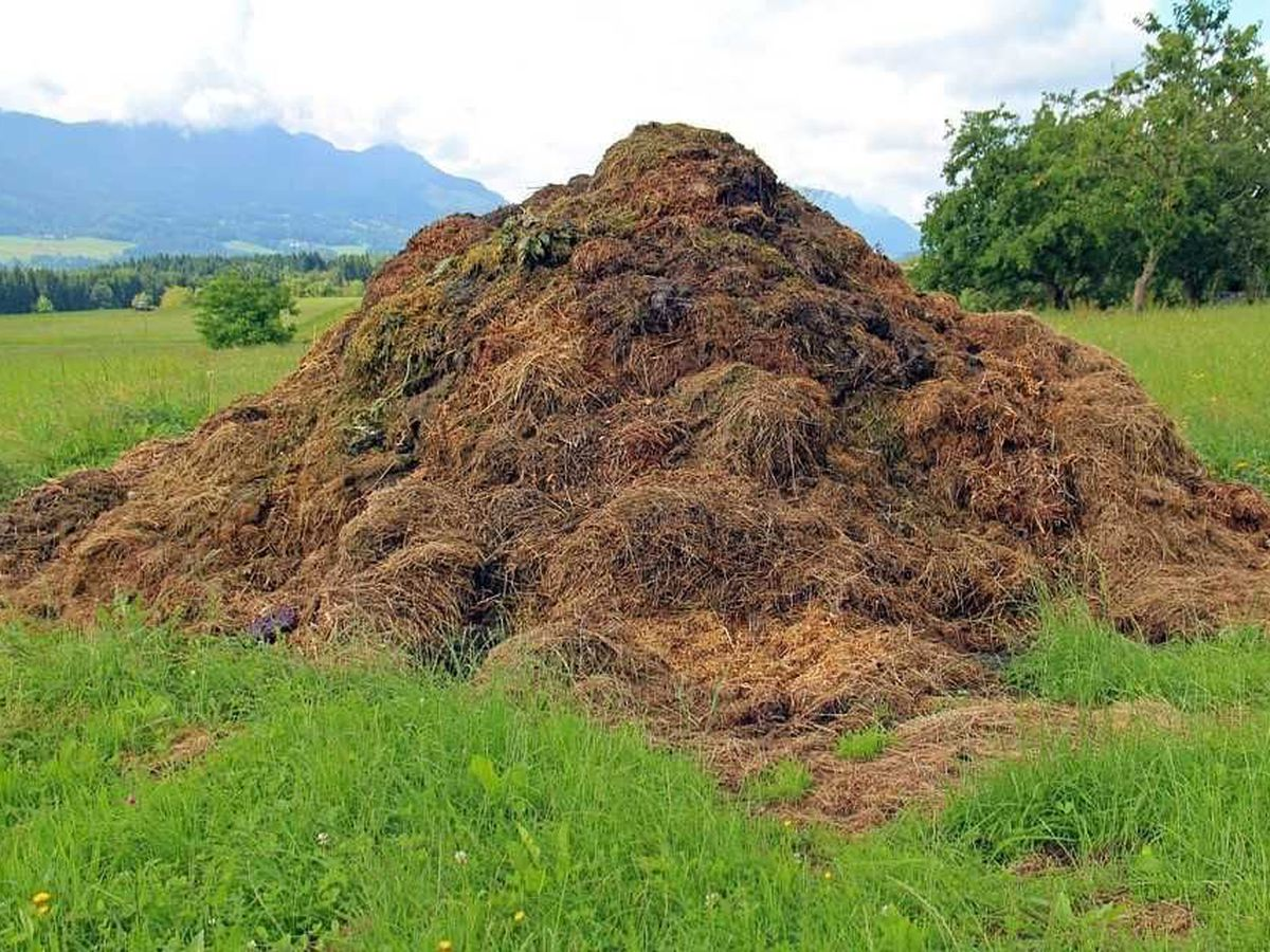 East Texas Ag News: Benefits of composting yard waste