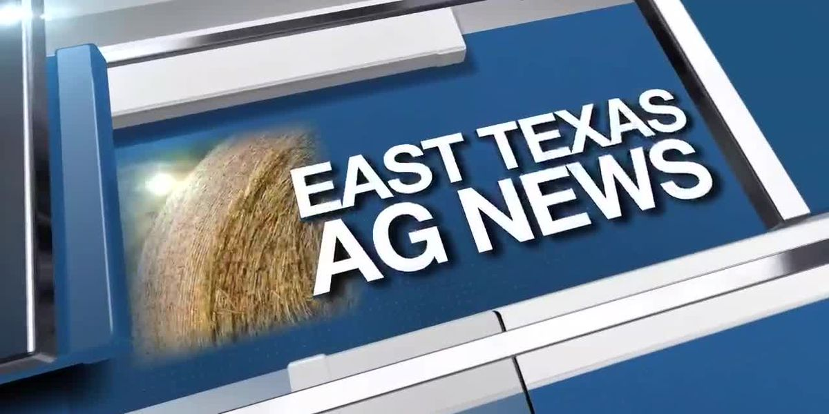East Texas Ag News: This week's cattle prices remain mostly steady