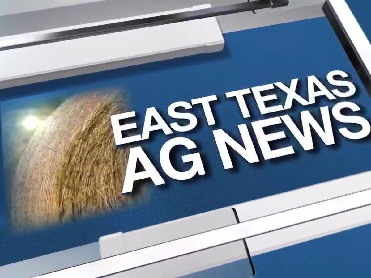East Texas Ag News: Coronavirus scare affecting cattle future board