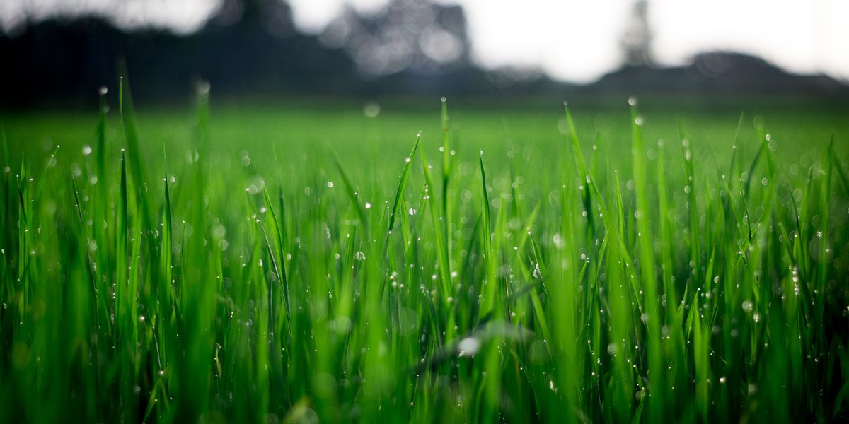 East Texas Ag News: Caring for your lawn during cooler months
