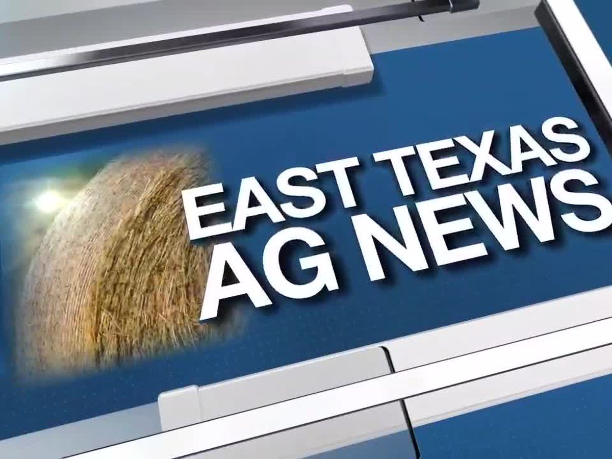 East Texas Ag News: Chicken wings sales to set record ahead of the 'big game'