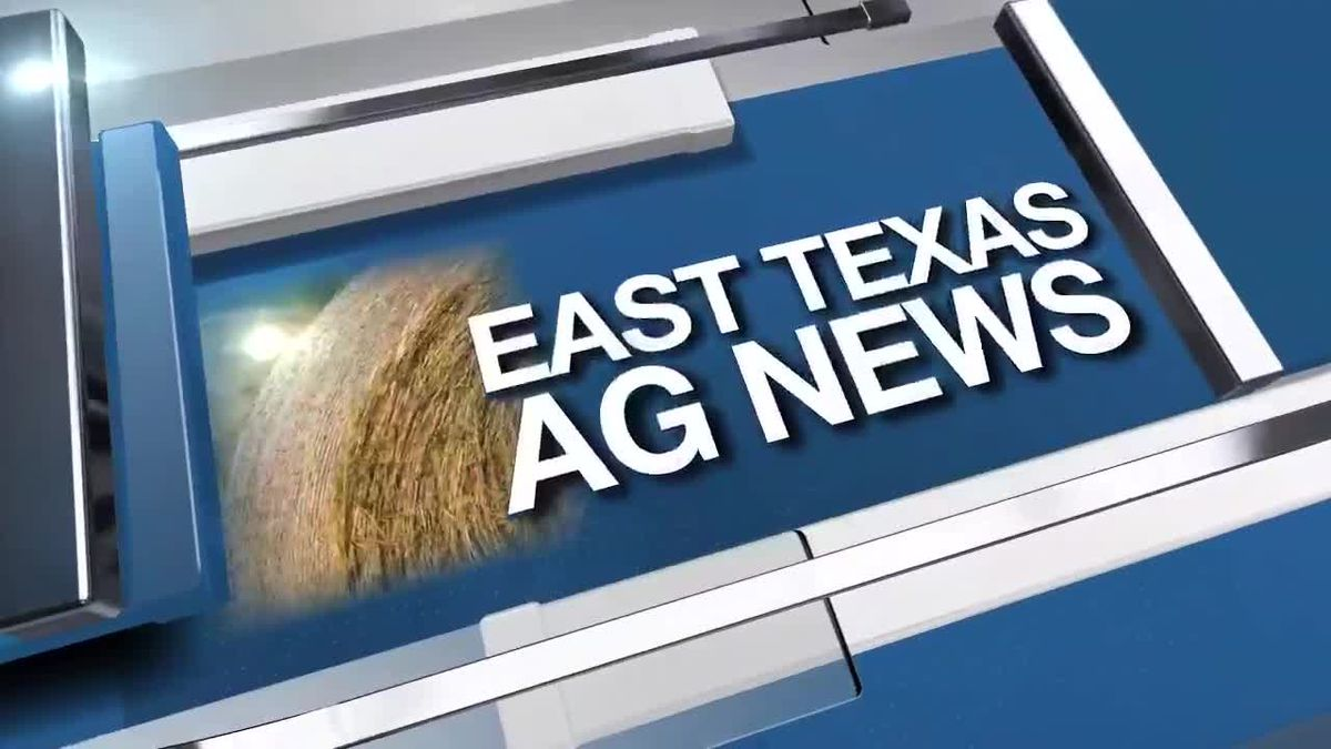 East Texas Ag News: Hay prices remain steady this week