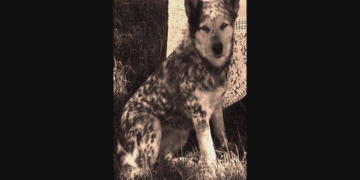 East Texas man says deputy shot his dog