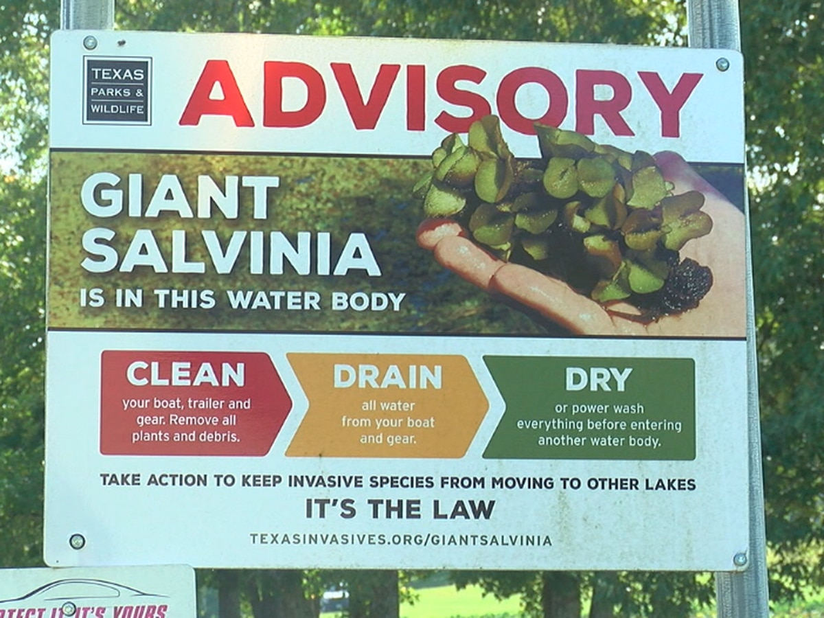 Texas Parks & Wildlife: Giant Salvinia found at Lake Athens, Lake Gilmer