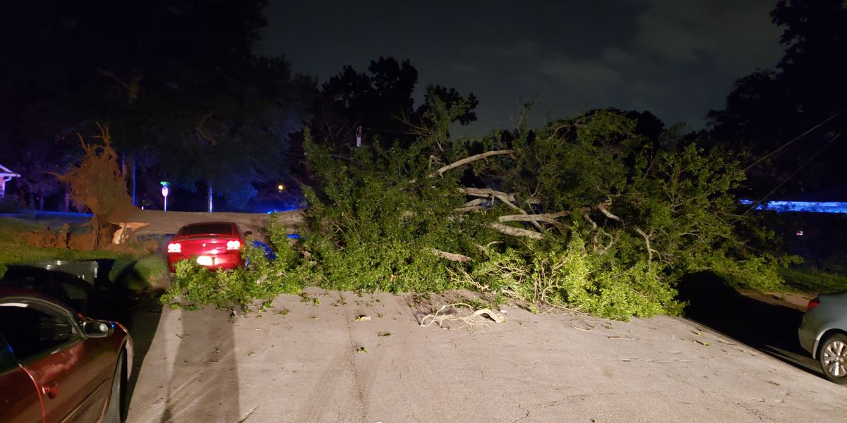 Tyler neighborhood without power after tree falls, taking down power lines, hitting vehicles