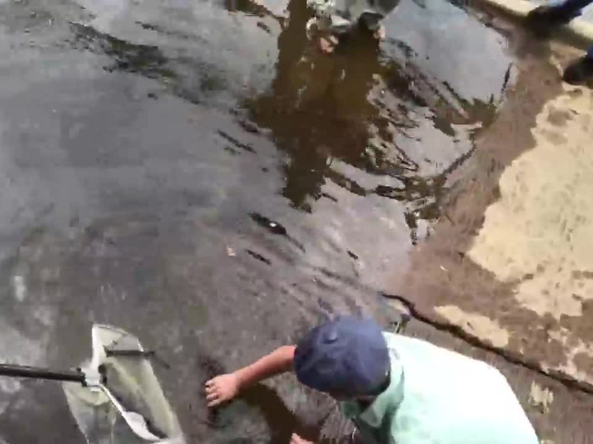 WEBXTRA: Wildlife officials release thousands of paddlefish into Big Cypress Bayou