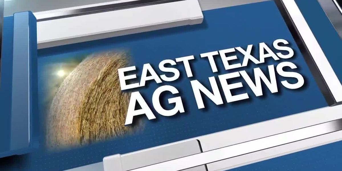 East Texas Ag News: Cattle prices up past two weeks