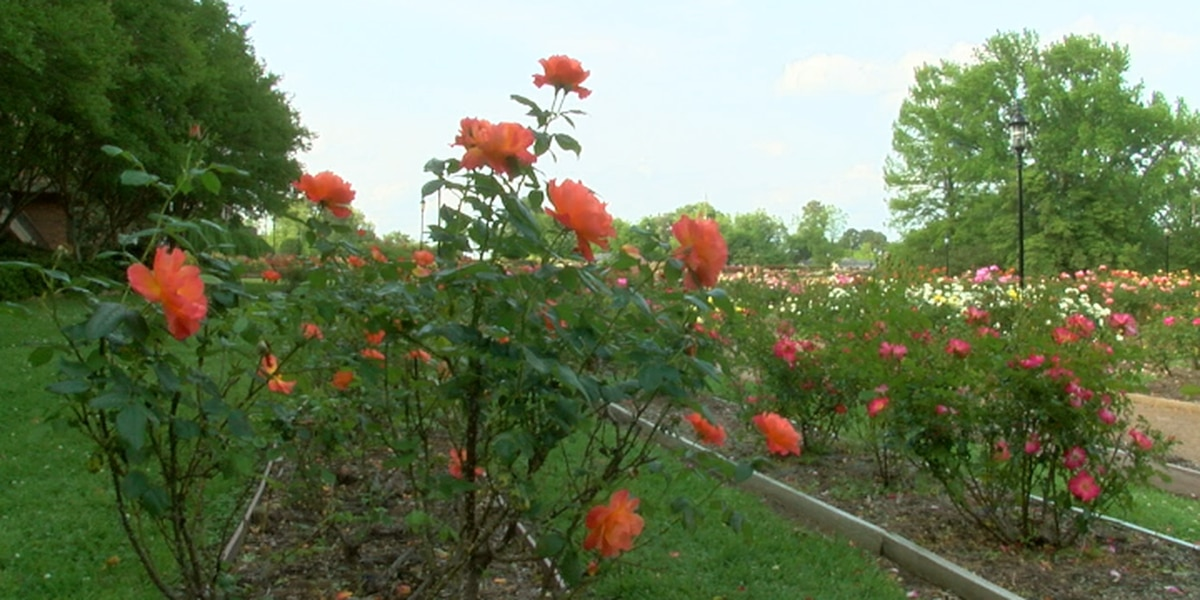 Tyler Rose Garden designated as 'national treasure' in register of historic places