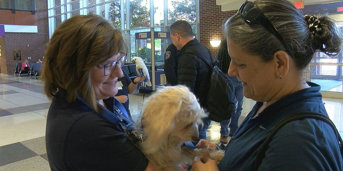 Therapy animals offer holiday travel stress relief at Tyler airport