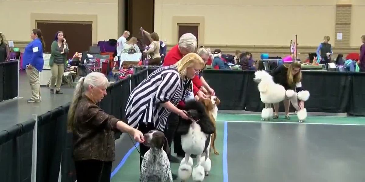 Maude Cobb Dog Show