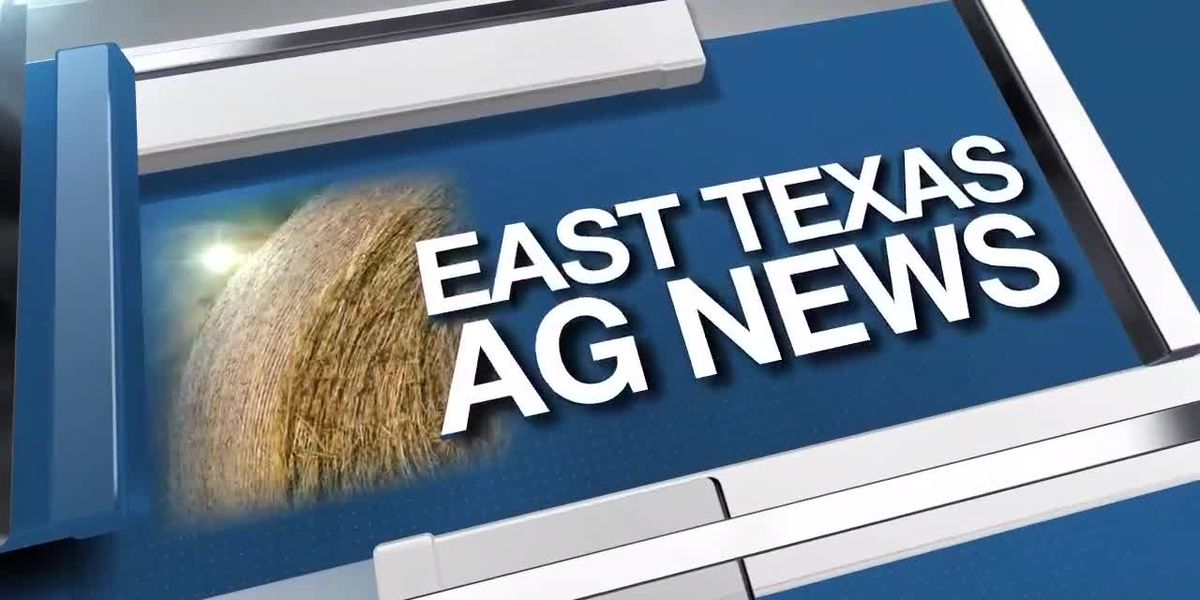 East Texas Ag News: Planting operations in full swing across Texas
