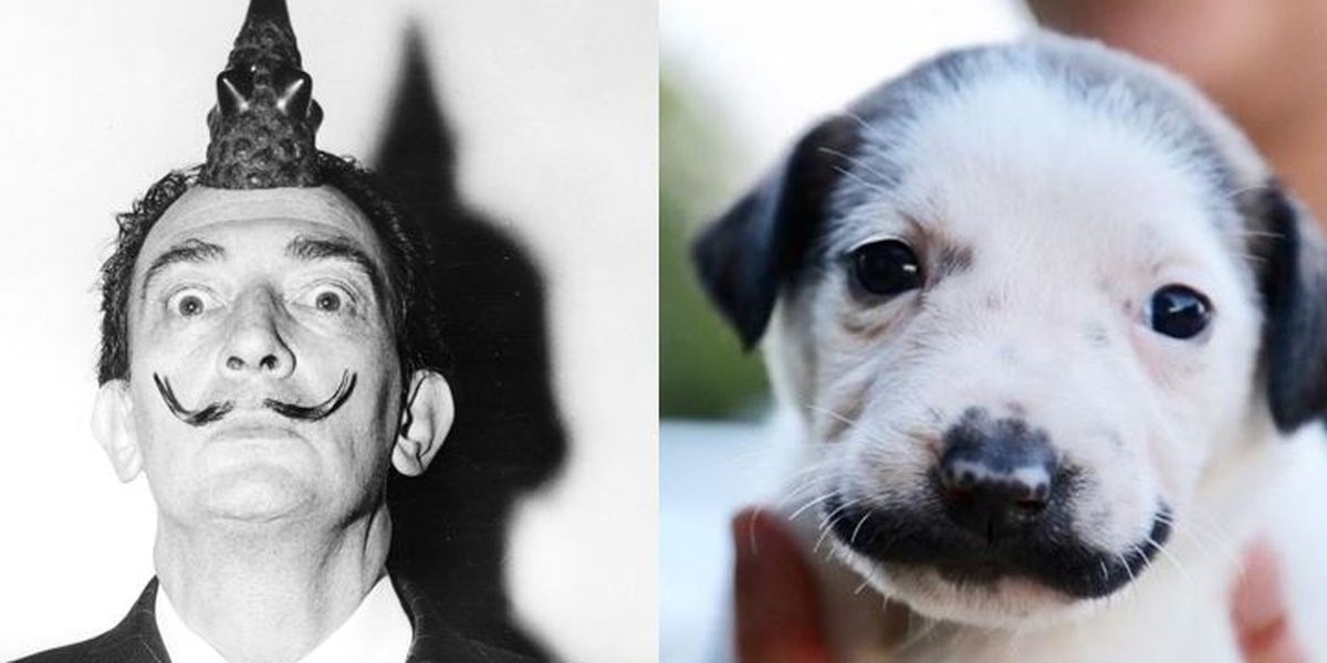 Meet Salvador Dolly, the pup with a Dali-style mustache