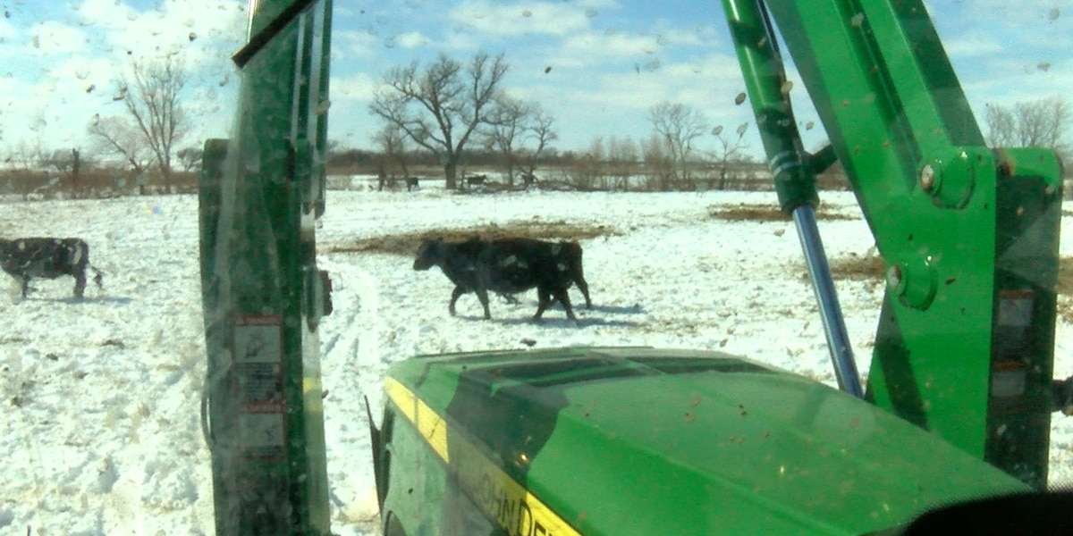 """""""It's part of the nature I'm in;"""" farmers braving severe conditions to care for livestock"""