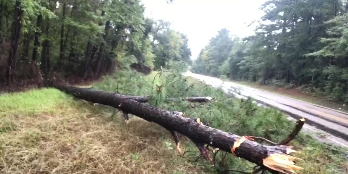 WEBXTRA: Heavy rain leads to downed trees, road closures