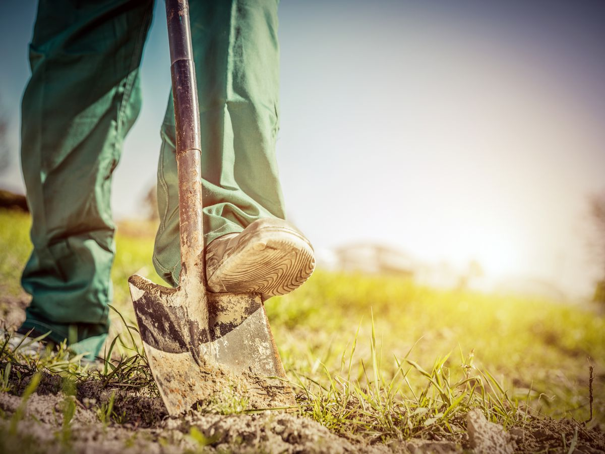 East Texas Ag News: How to enrich gardening soil