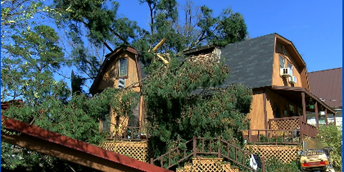Woman says family is happy to be alive after tree crashed through roof