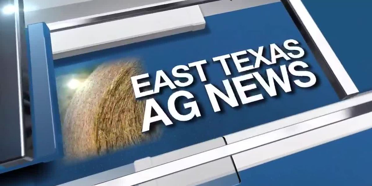 East Texas Ag News: Texas hay trades steady in all regions this week