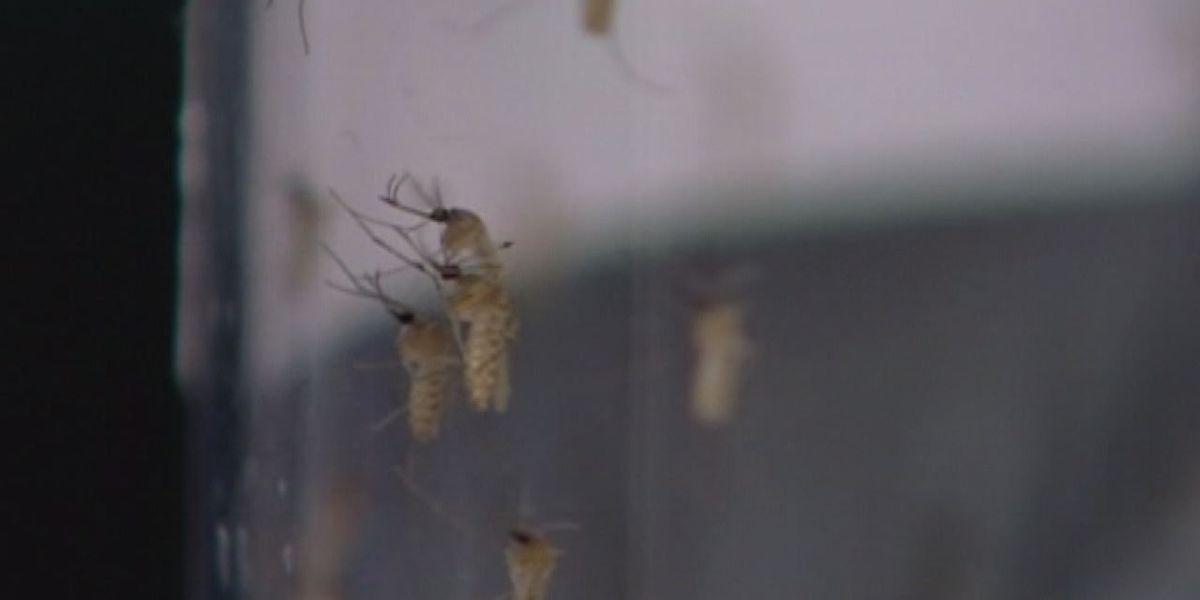 Zika symptom check list