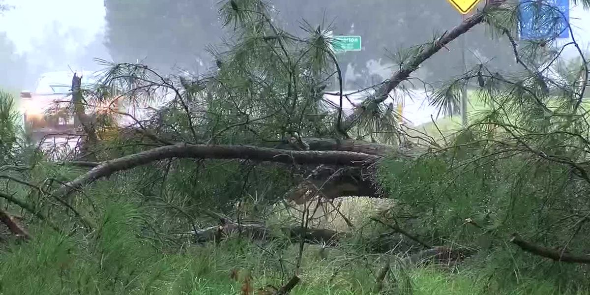 VIDEO: Rain-soaked ground could lead to falling trees