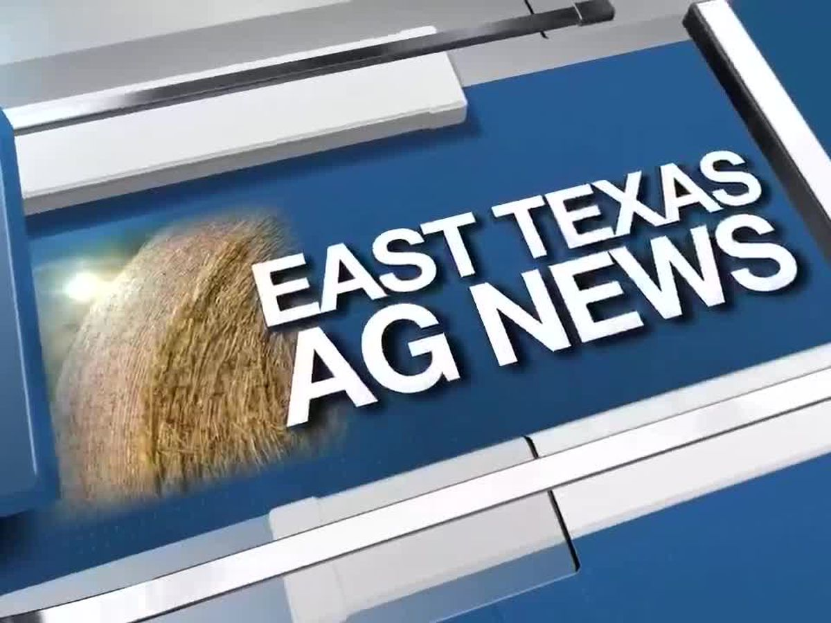 East Texas Ag News: This week's hay prices remain steady in most regions