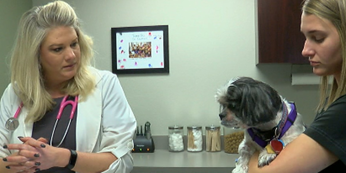 East Texas veterinarians warn pet owners of dog flu