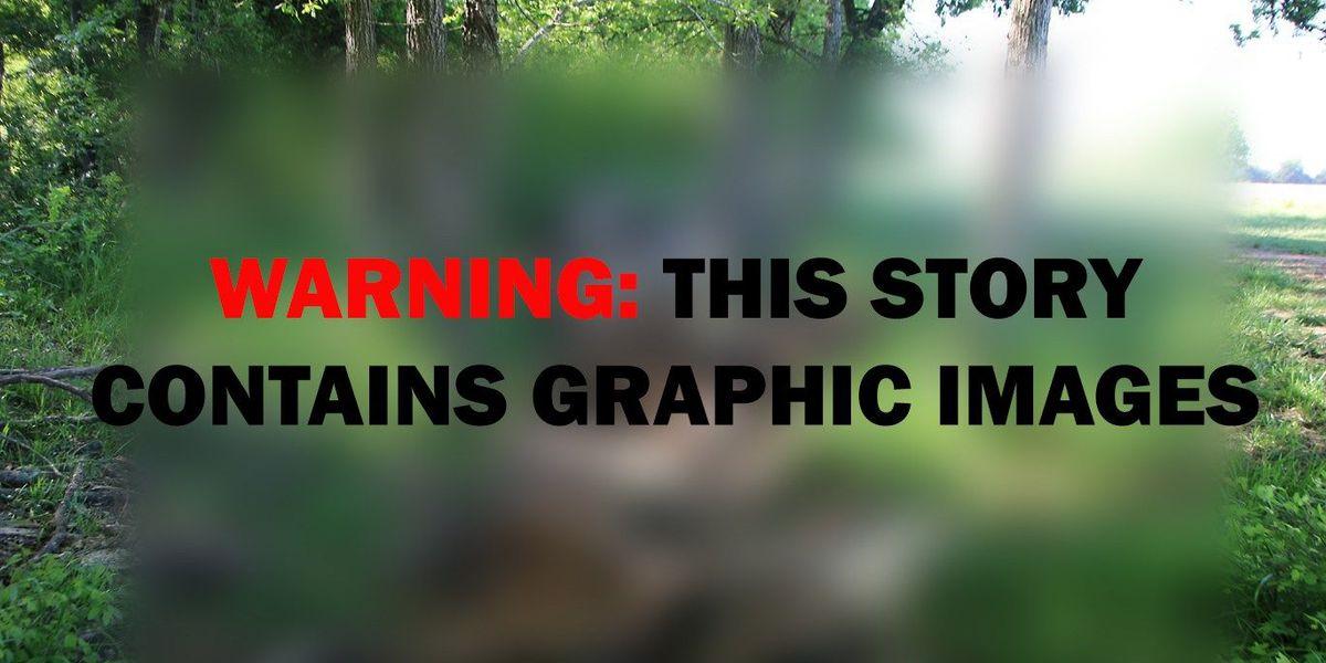 50 horses found decomposed, 87 animals seized in Van Zandt County