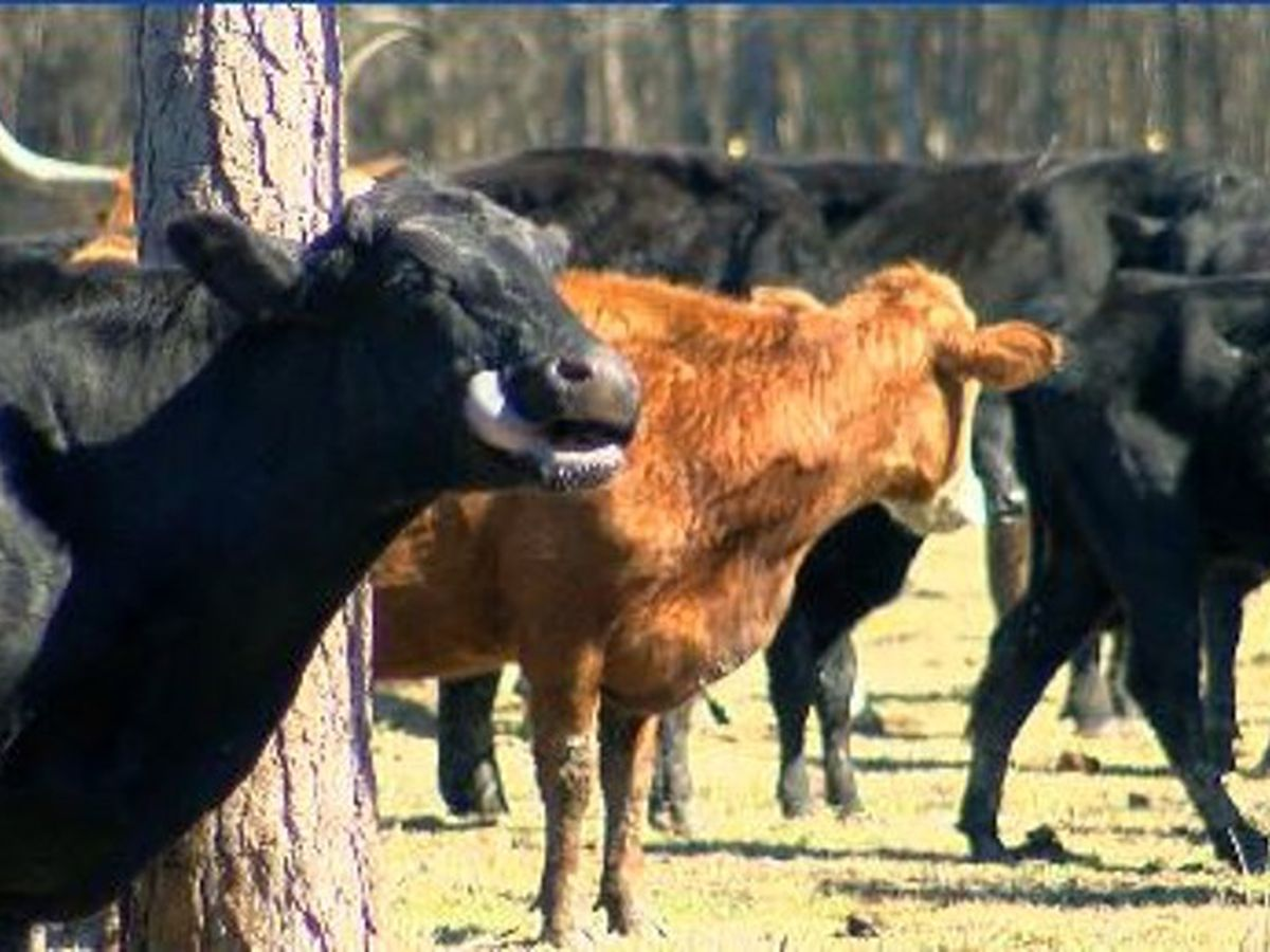 East Texas farmers, ranchers counting the cost of last week's winter storms