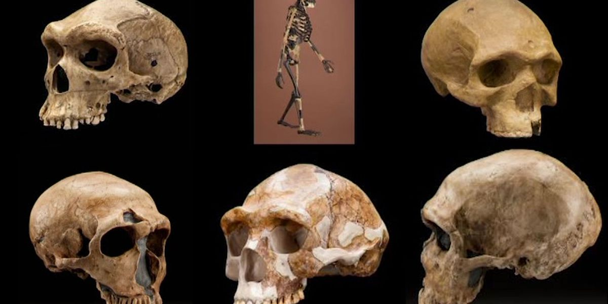 Scientists discover evidence of new ancient human species