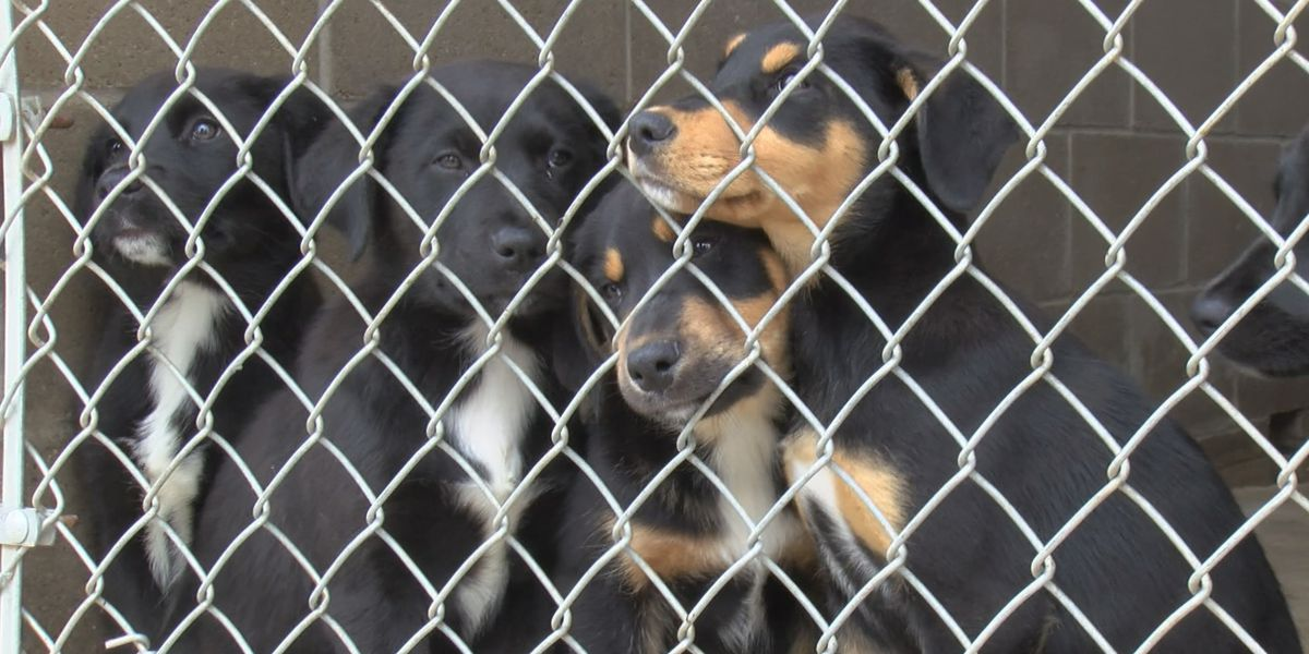 Smith County to provide animal shelter services to City of Overton