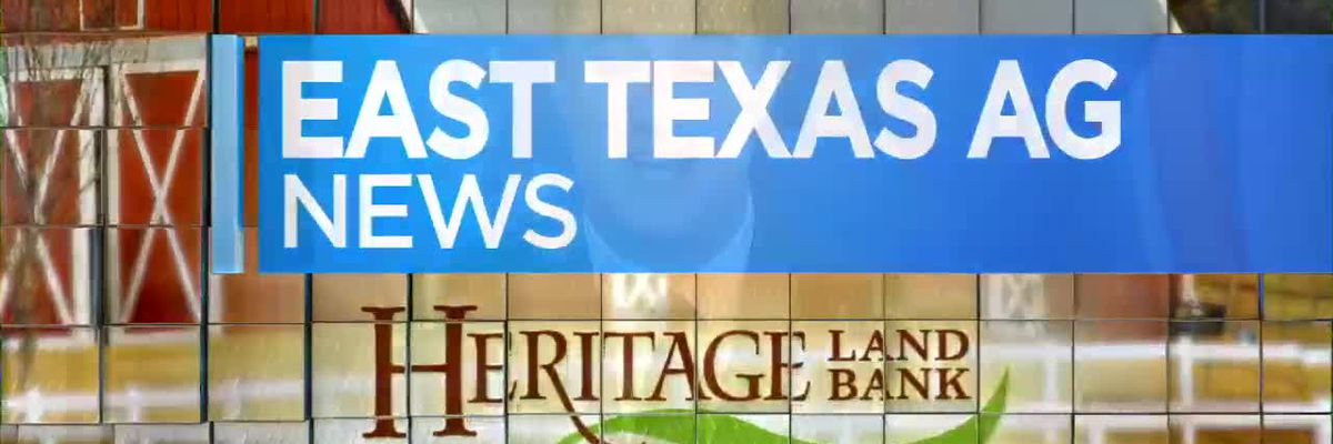 East Texas Ag News: Latest prices for cattle and hay producers