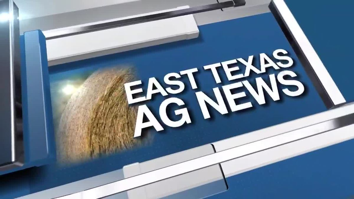 East Texas Ag News: Hay trades remain steady this week